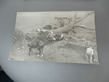 Gainford, County Durham AREA  TREE SURGEONS as they used to be 1905 era  RP Pcd