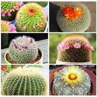 100 Rare Mix Lithops Cactus Bulk Seeds,Bonsai Seeds hot Indoor sell Succule F5I7