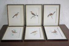 Set 6 Antique Vintage Birds Warblers Nuthatch Hand Coloured Plates Print Framed