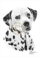 Dog DALMATION pencil drawing art A4 size by UK artist Pet Portrait