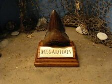 "MEGALODON SHARK TOOTH TEETH 4"" FOSSIL DISPLAY STAND Tooth Not Included"