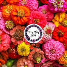 Zinnien LILIPUT Mischung Bunte Farben Staude 100 Samen Bauerngarten Blumensamen