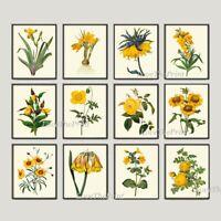 Unframed Botanical Print Set 12 Antique Yellow Garden Flowers Wall Art Decor
