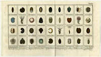 Antique Print-FLOWER-SEEDS-ROSEMARY-PARSLEY-DILL-Martinet-1779