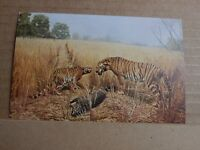 Postcard Bengal Tiger Chicago Natural history museum  unposted