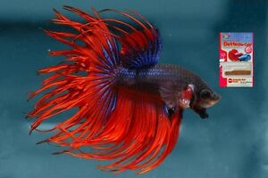 Hikari Betta Bio-Gold Color Enhancing Fish Food 2.5g FREE SHIPPING