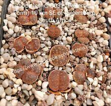 30 SEEDS Lithops lesliei C032 (Pietersburg Form) 10 km SE   living stones