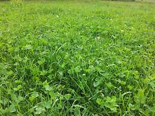 10 kg Schafweide Weidemischung für Schafe Weidesaat Grassamen Weide Wiese Gras
