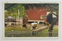 Postcard Deer at Lincoln Park Zoo Chicago Illinois