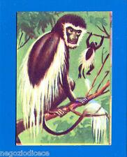 ANIMALI - Lampo 1964 - Figurina-Sticker n. 42 - COLOBO O GUEREZA -New