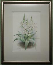Original Watercolour Painting Floral Flower STAR OF BETHLEHEM - ELIZABETH MCEWEN