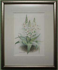 Original Watercolour Art Painting Flower STAR OF BETHLEHEM - ELIZABETH MCEWEN