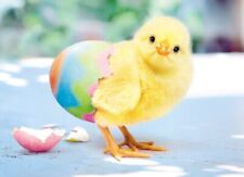 Avanti Cute Chick Happy Easter Photo Greeting Card Funny Range Cards
