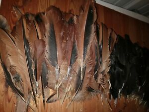 Chicken Feathers for crafts, fishing, art (black and brown) 300+ pieces