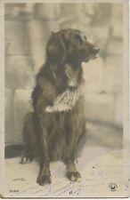 CARTE POSTALE / POSTCARD / THE DOG / CHIEN / PHOTO HARRY'S