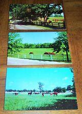 KENTUCKY POSTCARD - LOT OF 3 HORSES IN PASTURE - LEXINGTON -CURTEICHCOLOR-DEXTER