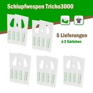 Schlupfwespen gegen Kleidermotten 6000 Stück auf 2 Karten x 5 Lieferungen