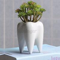 Tooth Shape White Ceramic Flower Pot Modern Modern Planter Holder Desktop DIY