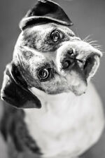 BEAUTIFUL CUTE BOXER DOG CANVAS PICTURE #36 STUNNING A1 PET CANVAS FREE P&P
