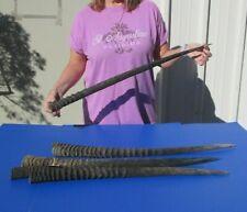 5 piece lot of 28-31 Inch South African Gemsbok Horns Taxidermy #42349