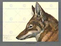 PAINTING BOOK ABYSSINIA BIRD MAMMAL FUERTES WOLF 12x16'' ART PRINT POSTER LAH705