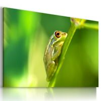 FROG Wild And Domestic Animals Canvas Wall Art Picture Large Sizes AN320 MATAGA