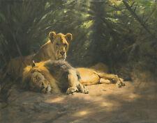 Kuhnert Wilhelm The Lions Den Canvas 16 x 20   #3408