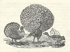 Thomas & John Bewick-Wood Engravings-Descriptive & Critical Catalogue of Works