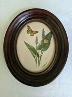 Small Antique Monarch Butterfly Framed Print