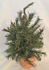 "Evergreen 12"" Wire Artificial Landscape Tree in Teracotta Pot"