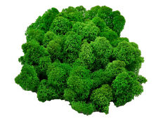 Muwse Islandmoos Köpfe V 4-12cm 50g Gras-grün handgereinigt Moos Büsche Bäume