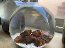 LARGE OPAE ULA HAWAIIAN RED SHRIMP OPEN ECOSPHERE WITH 12+ OPAE ULA SHRIMPARIUM