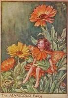 Flower Fairies: The Marigold Fairy Vintage Print c 1930 Cicely Mary Barker