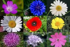 MEADOW WILD FLOWER BUTTERFLY & BEE MIX 4000 SEEDS poppy cornflower oxeye daisy