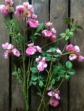 Pretty Pink Artificial Rose Branch, Realistic Silk Flowers, Faux Roses