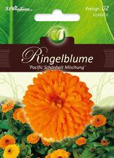 Ringelblume,Pazific Schönheit,Samen,Calendula officinalis,Blume,Chrestensen,PG2