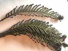 5pc Artificial Fern Stem Flocked Dragon 18