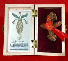 Mandrake Root Ritualized for Love In Wooden Box