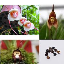 10pc Magic Monkey Face Orchid Flower Seeds Plant Seed Bonsai Dracula Simia Luer