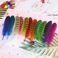 10//50//100pcs high quality natural pheasant tail feathers 4-14 inches//10-35 cm