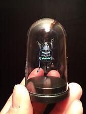 "Cabinet de curiosités ""My little globe"" insecte Eupholus magnificus!!"