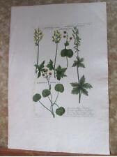 "Vintage Engraving,ACONITUM,C.1740,WEINMANN,Botanical,20x13.5"",Mezzotint"