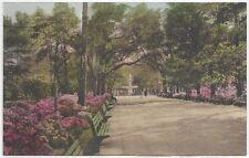 Postcards/Georgia-In Forsyth Park, Savannah GA-(divided, unposted)