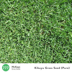 McKays Kikuyu Grass Seed Pure- 1kg- Covers 100m2 Lawn seed 100% PURE