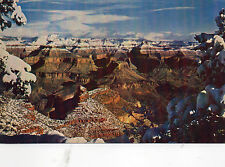 postcard USA  snow capped pines  Grand Canyon National Park Arizona   unposted