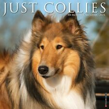 Just Collies (dog breed cal) 2021 Wall Calendar (Free Shipping)