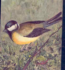 GREAT TIT BIRD IN WILD BY FRED SAUTER,,(SIMILAR TO AMERICAN CHICKADEE) POSTCARD
