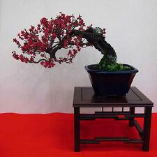 10pcs Beautiful Red Prunus Seeds Bonsai Seeds Home Garden