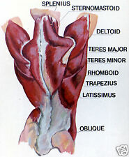 Oil Watercolor Painting DVD Anatomy Reed AN0910d NEW