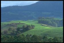 296004 Tea Plantations Honde Valley A4 Photo Print